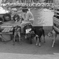 Таиланд. Паттайя. Собаки и катера :: Владимир Шибинский