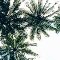 Пальмы :: Arman S