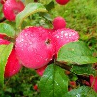 С яблочным спасом... :: Valentina