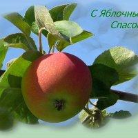Сегодня - Яблочный Спас :: Татьяна Смоляниченко