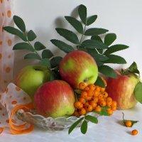 Яблоки с рябинкой :: Татьяна Смоляниченко