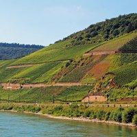На склонах вдоль Рейна :: Alexander