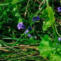 Цветочки полевые :: Света Кондрашова