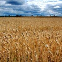 Новый урожай :: Валерий Толмачев