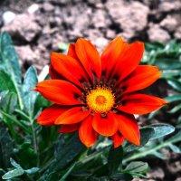 Цветок. :: Береславская Елена