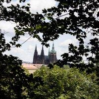 Собор Святого Витте, Прага :: Алёна Маненкова