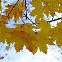 Осень. :: Береславская Елена