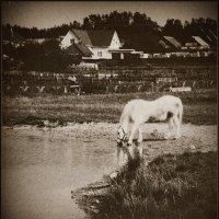 Лошадь :: Михаил Цегалко