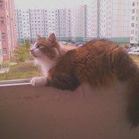 Любимое место отдыха кота :: Елена *