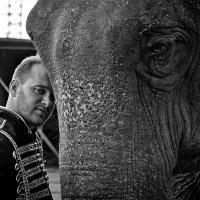 """Три фото о доверии... (Серия """"Из жизни заезжего цирка"""") :: Наталья Костенко"""