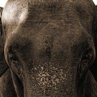 Вместилище слоновьей мудрости... :: Наталья Костенко