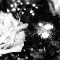 "Фантазия на тему ""Чёрное и Белое"" :: Татьяна Каримова"