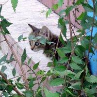 Жил был любопытный котёнок ! :: Мила Бовкун