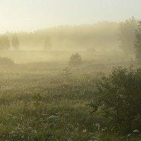 Утро туманное2 :: Сергей Жданов