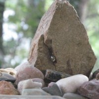Алтайский алмаз :: Алекс Аро Аро