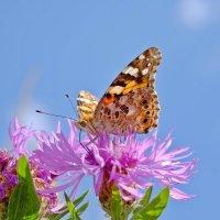 Красота уходящего лета :: Swetlana V