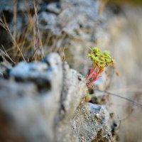 Когда цветут камни :: Елена Фомина