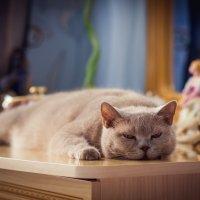 Их жизни кошачих :: Олег Дорошенко