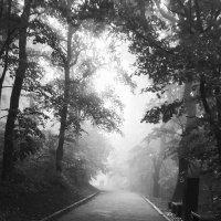Старый парк :: Ирина Безверхова
