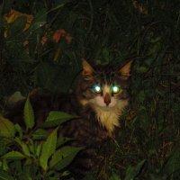 Кот страшилка. :: Татьяна ❧