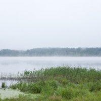 Утренний туман :: Владимир Левый