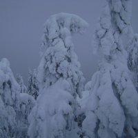 Зима. Финляндия. Коли :: Марина Домосилецкая