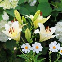 Белые цветочки!!! :: Светлана Масленникова