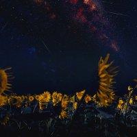 Звездопад Персеиды над полем подсолнуха, 2016 год. :: Станислав Башарин