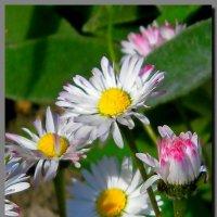 цветы у дома. :: Ivana