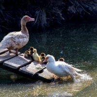 Веселое семейство:) :: Алёна