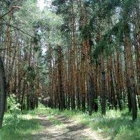 Жил-был лес, в котором было много чудес! :: Ольга Кривых