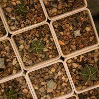Палитра кактусов :: Настя Жукова