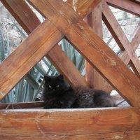 Кошка с  о. Менорка .на сиесте. :: Виталий  Селиванов