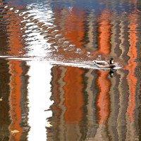 Заплыв в осень :: Екатерина Торганская