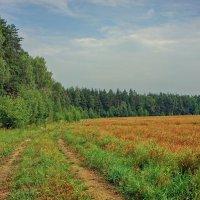 Между лесом и полем... :: марк