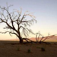 пустыня :: svabboy photo