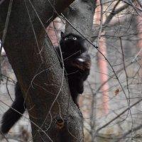завсегдатай деревьев :: Валентина Папилова