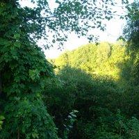 Оттенки зеленого :: марина ковшова