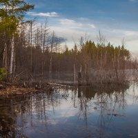Утро на озере :: Сергей Сол