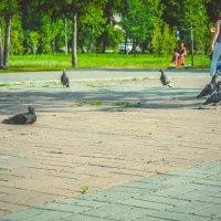 голуби и люди в одном парке :: Света Кондрашова