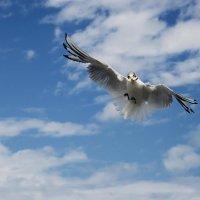 Чайки.  ...где-то Бог послал кусочек хлеба... :: Олег Пученков