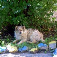 Старый , добрый пёс . :: Мила Бовкун