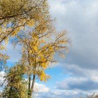 Осень на Разливе 4 :: Виталий