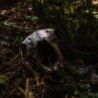 артефакт леса :: Геннадий Федоров