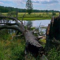 У озера Бедины! :: Владимир Шошин