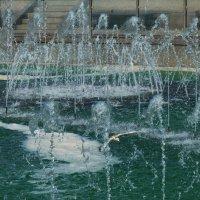 чайка в брызгах фонтана :: Galina Leskova