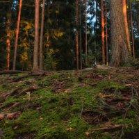 Природа Финляндии :: Евгения К