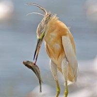 Рыбный обед :: Артемий