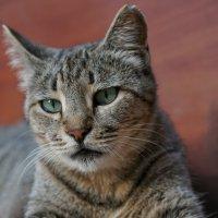 Сурьезный котейка :: Андрей Майоров
