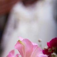Белое платье :: Михаил Барамович